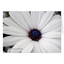 Flower with white center cards greeting photo cards zazzle white flower with blue center card mightylinksfo