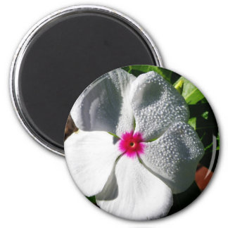 White Flower with Raindrops Magnets