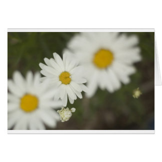 White Floweres Card