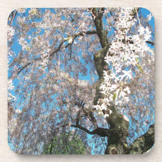 White, Flowering Tree Coaster