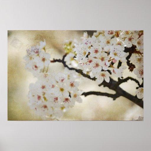 White Flowering Tree Print