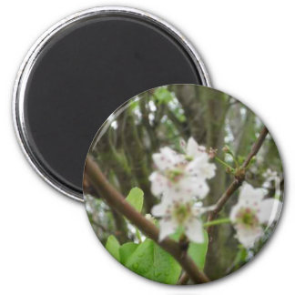 White Flowers Fridge Magnet