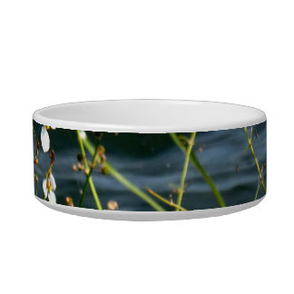 White flowers green stems blue pond back cat water bowl