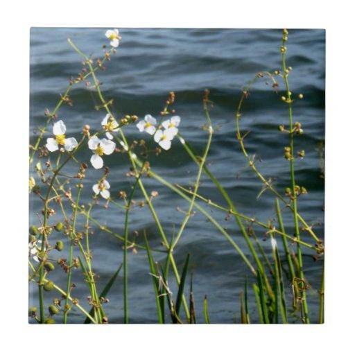 White flowers green stems blue pond back tile