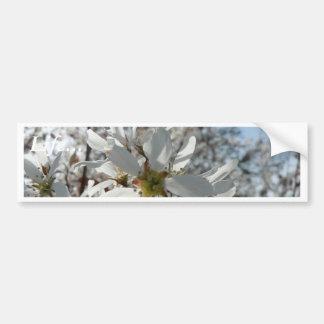 White Flowers In Bush Bumper Sticker