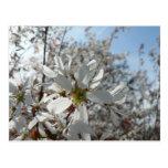 white-flowers-in-bush postcard
