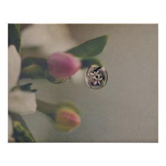 White flowers in Water Drop Poster