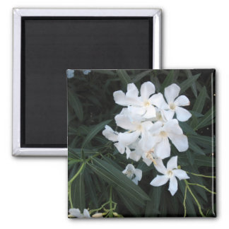 white flowers magnets