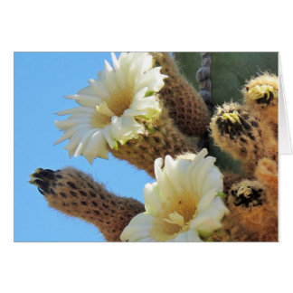 White Flowers on a Cactus Note Card