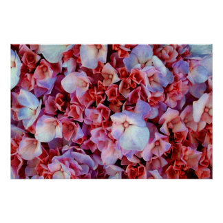 White Flowers (on red, bunch) Poster