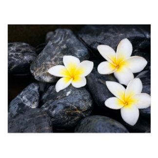 White flowers on the black stones postcard