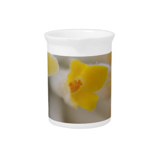 white flowers on tree in spring drink pitcher