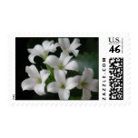 White Flowers Postage