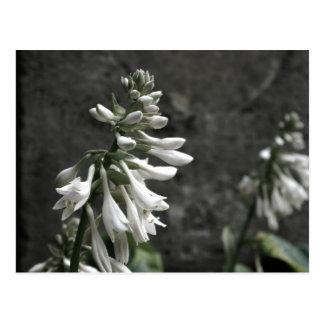 White Flowers Postcard