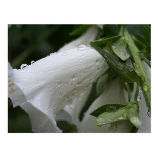 White flowers postcard, Auckland Wintergarden Postcard