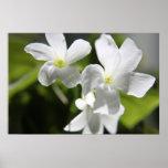 White flowers print