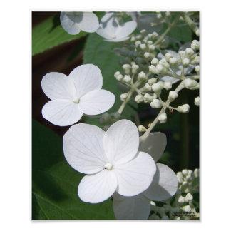 White Flowers Print Photo Print
