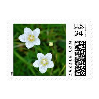 White flowers stamp