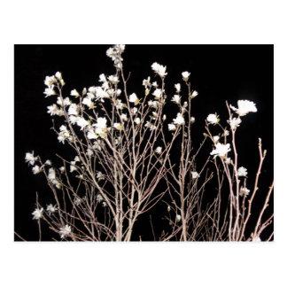 White Flowers Tree Branches Black Night Postcard