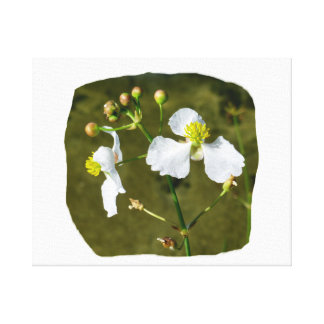 White flowers yellow center round buds canvas print