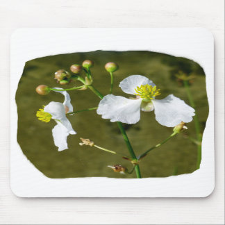 White flowers yellow center round buds mouse pads