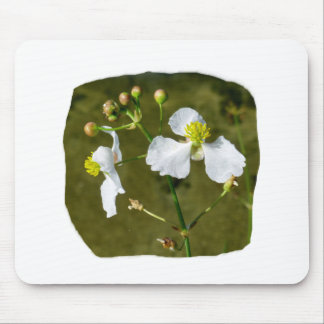 White flowers yellow center round buds mouse pad
