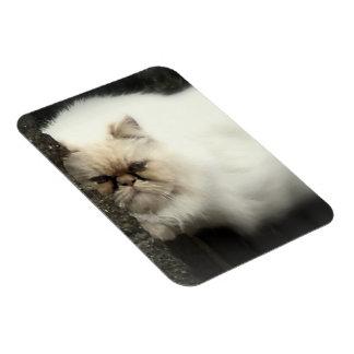 White Fluffy Cat Magnet