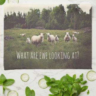 White Fluffy White Sheep & lambs in pasture photo Hand Towel