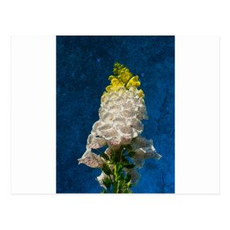 White Foxglove flowers on texture Postcard