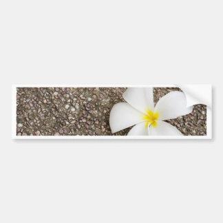 White Frangipani flower on rock surface Bumper Stickers
