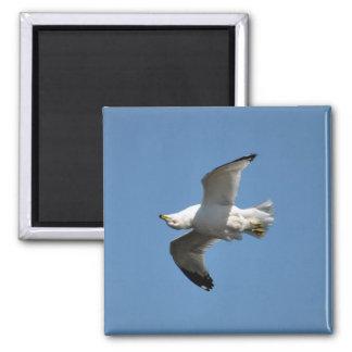 White Freshwater Gull Bird-lovers 2 Inch Square Magnet