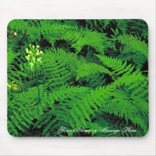 White fringeless orchid mouse pad