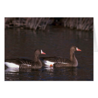 White-fronted Geese Greeting Card