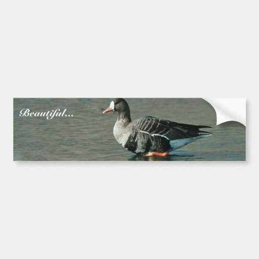 White-fronted Goose Bumper Sticker