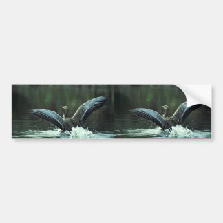 White-fronted Goose Landing on Water Bumper Stickers