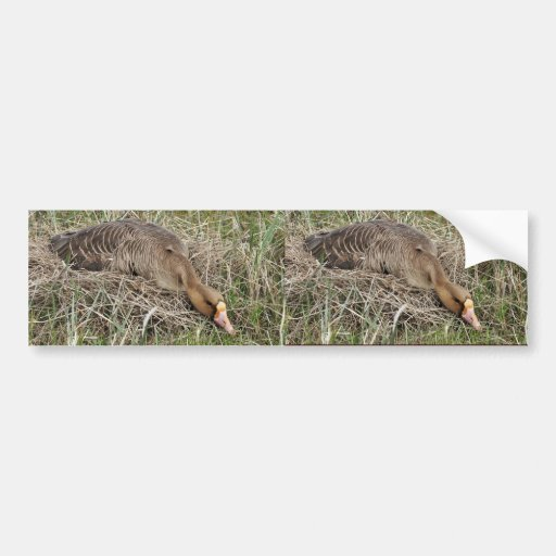 White-fronted Goose on Nest Bumper Stickers