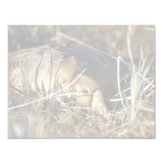 White-fronted Goose on Nest 4.25x5.5 Paper Invitation Card