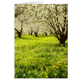 white Fruit trees in bloom, Hood River, Oregon, US Greeting Card