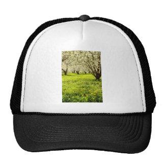 white Fruit trees in bloom, Hood River, Oregon, US Mesh Hat