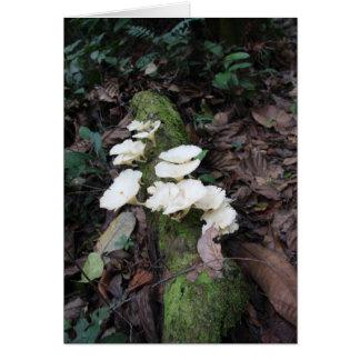 White fungus card