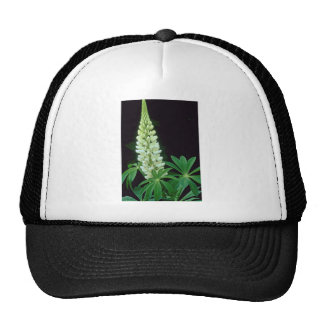 white Garden lupine, New Brunswick, Canada. flower Trucker Hats