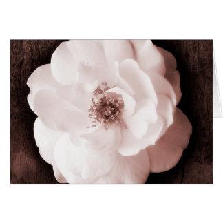 White Garden Rose Sepia Roses Flower Template
