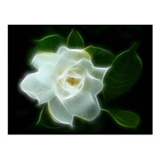 White Gardenia Flower Plant Postcard