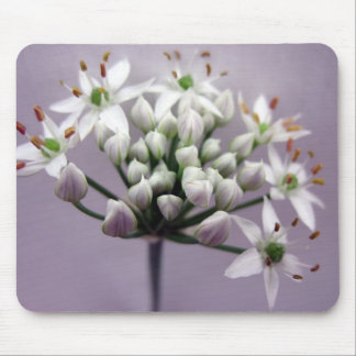 White Garlic Chive Blossoms on Purple Mouse Pad
