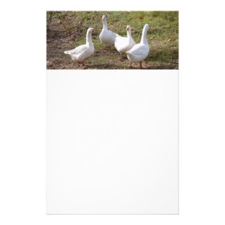 White Geese Customized Stationery