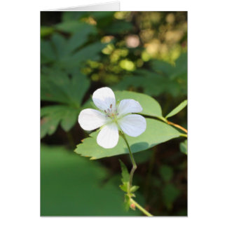 White Geranium Greeting Card
