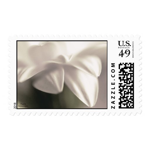 White Gerberra Daisy, US Postage USPS-approved