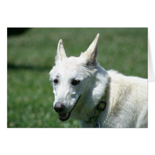 White German Shepherd Card