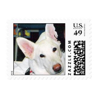 "White German Shepherd ""Chip"" Postage"