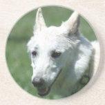 White German Shepherd coaster